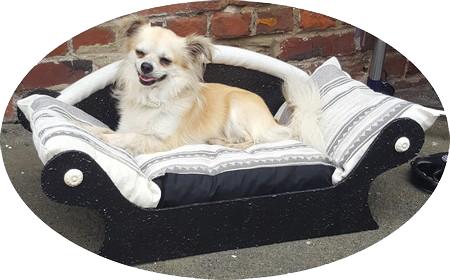 chien dans canape