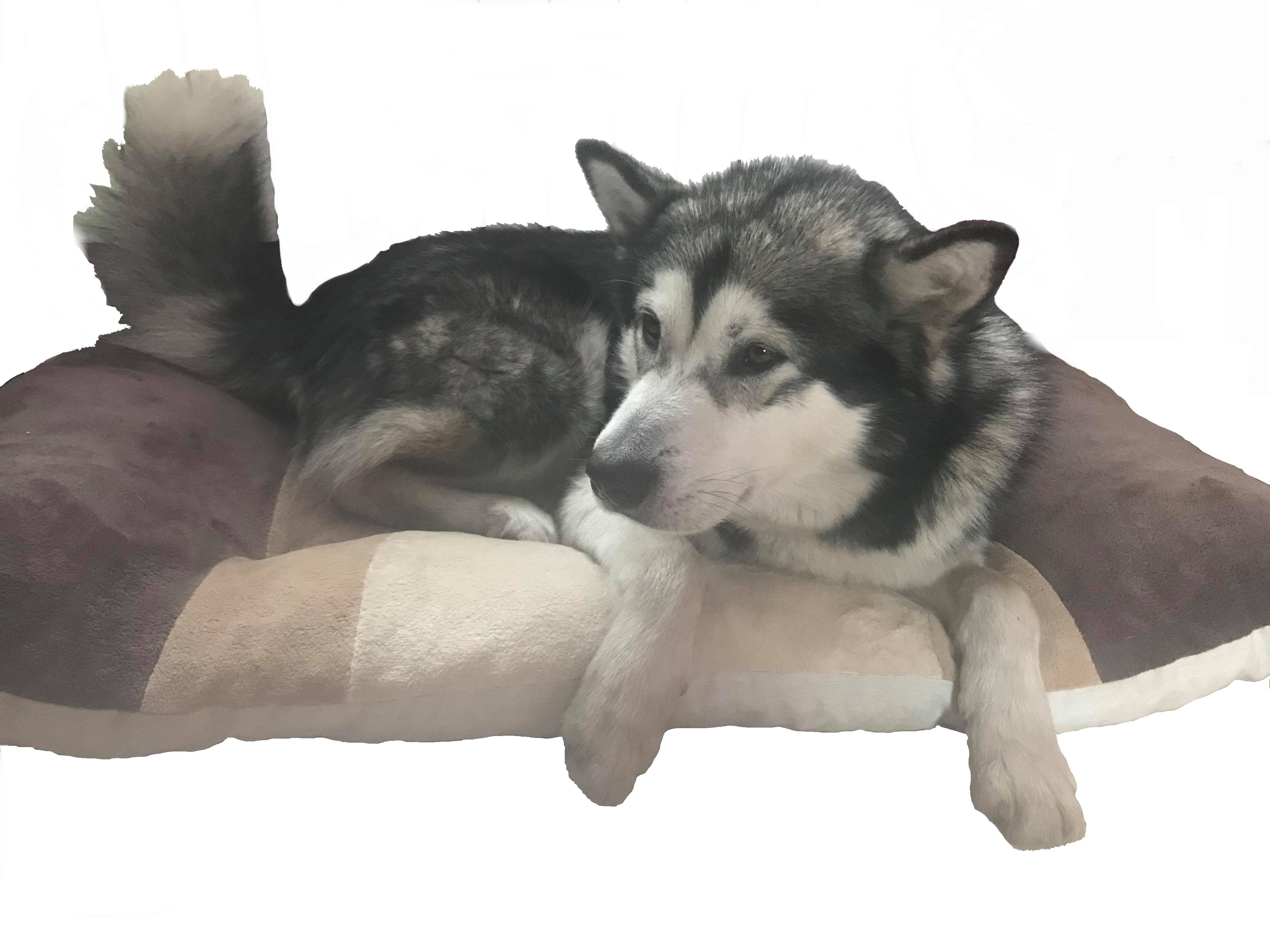 grand chien sur un coussin de sol- un trés bon lit de couchage